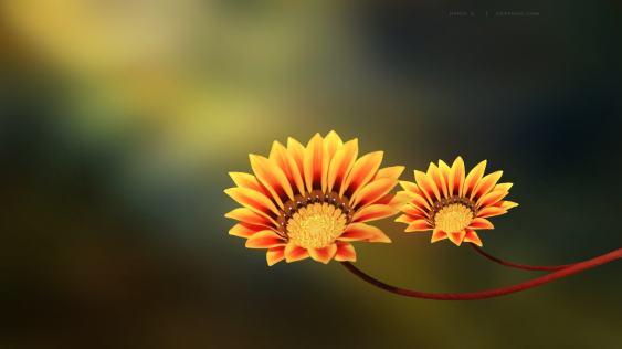 Widescreen-HD-Flower