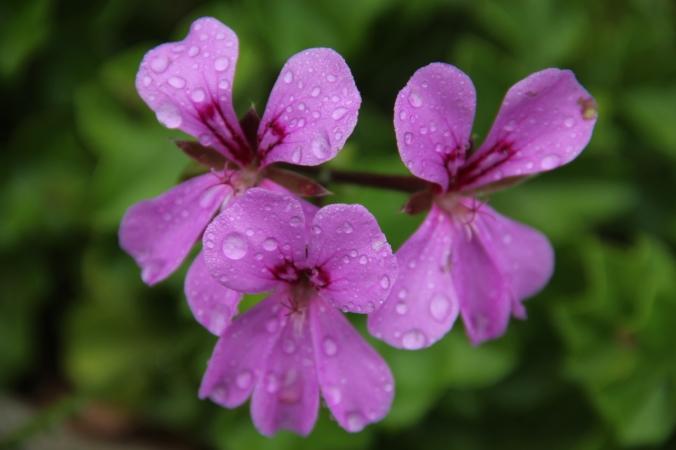 purple%20three%20flower.jpg